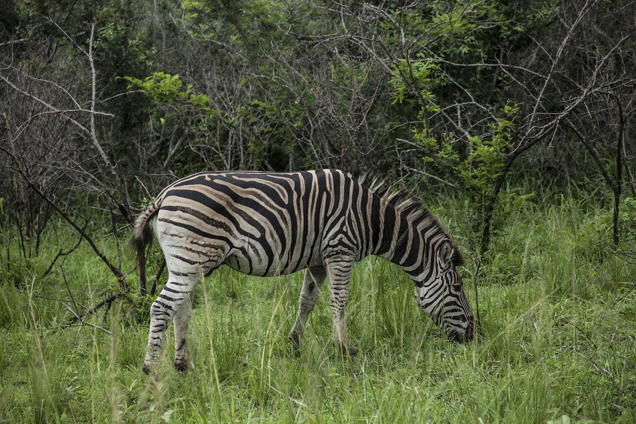 le tourisme de nature en Afrique
