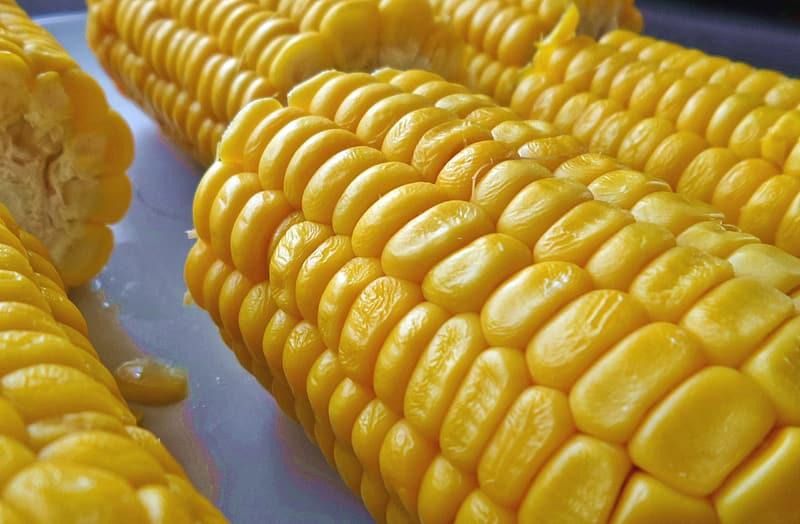 digérer Le maïs